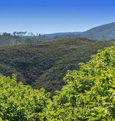 Gradação do verde ao azul entre montes e vales