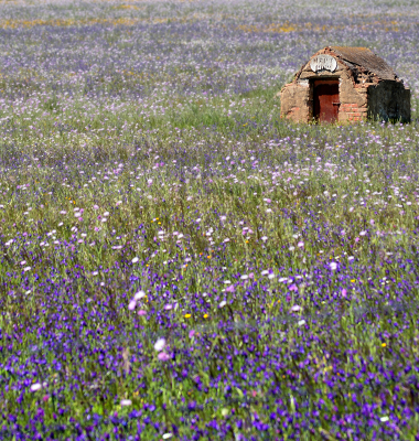 Furo de água num campo lilás