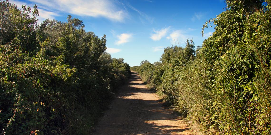 No caminho de São Lourenço…