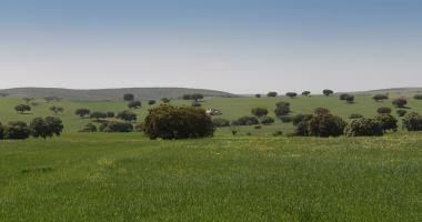 Planície verdejante