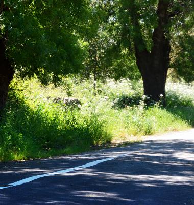 Caminho perto de Castelo de Vide