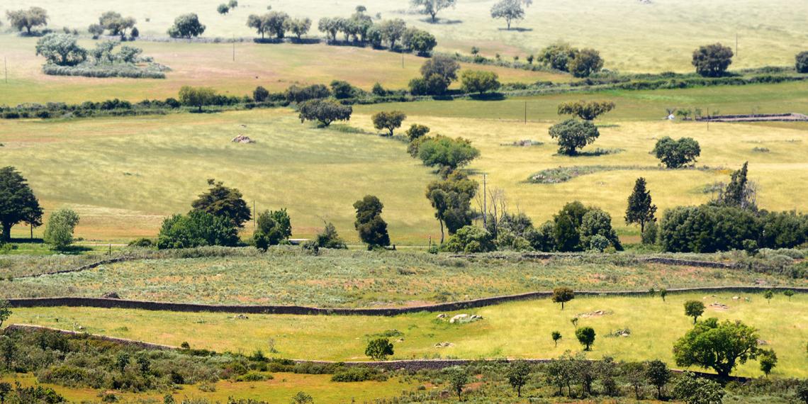 Vista sobre os campos