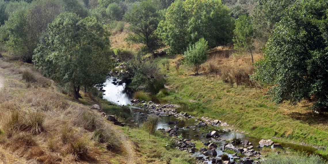 Ribeira de Nisa a montante da barragem (vista para Sul)