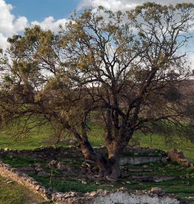 Árvore num quadrado