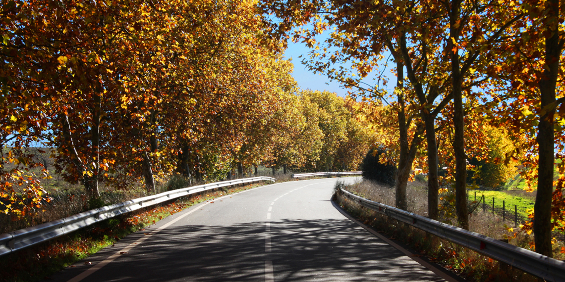 Estrada de Vila Fernando