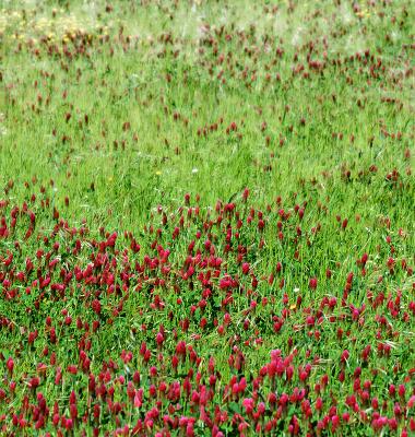 Prado espontâneo (verde e rosa)