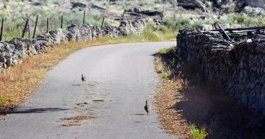 Aves na estrada