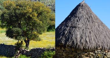 Quercus e abrigo cónico de pedra