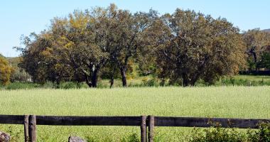 Cerca com Quercus em fundo