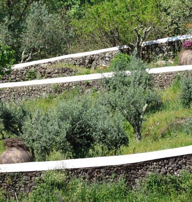 Muretes que escalam o verde
