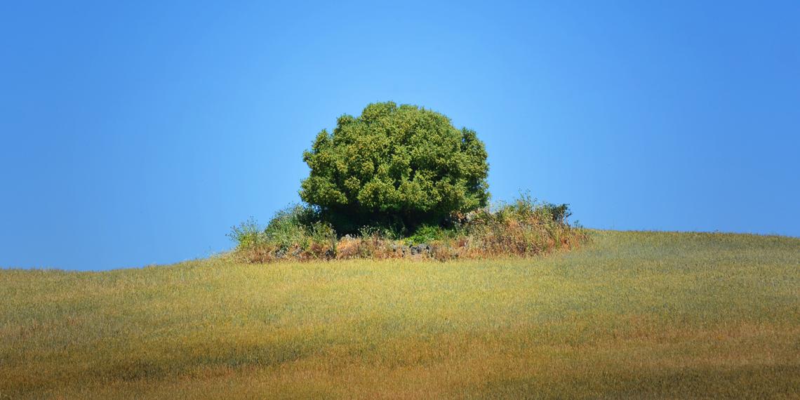 Uma árvore, uma Ilha verde