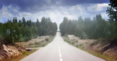 Caminho entre eucaliptos