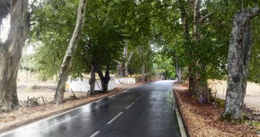 No caminho de S. Mamede