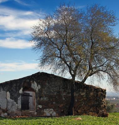 Ruinas…