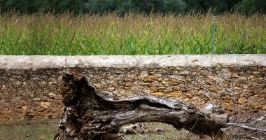 Murete e tronco morto